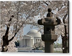 Cherry Blossoms With Jefferson Memorial - Washington Dc - 011327 Acrylic Print by DC Photographer