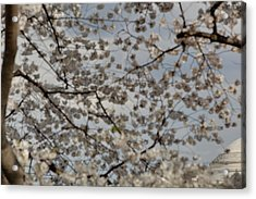 Cherry Blossoms With Jefferson Memorial - Washington Dc - 011330 Acrylic Print