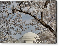 Cherry Blossoms With Jefferson Memorial - Washington Dc - 011331 Acrylic Print by DC Photographer