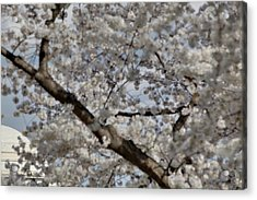 Cherry Blossoms With Jefferson Memorial - Washington Dc - 011332 Acrylic Print