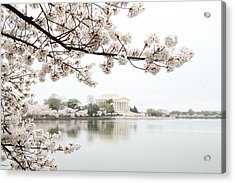 Cherry Blossoms With Jefferson Memorial - Washington Dc - 011344 Acrylic Print by DC Photographer