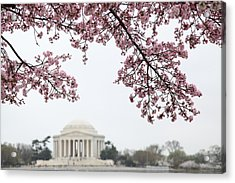 Cherry Blossoms With Jefferson Memorial - Washington Dc - 011351 Acrylic Print by DC Photographer