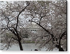 Cherry Blossoms With Jefferson Memorial - Washington Dc - 011352 Acrylic Print by DC Photographer