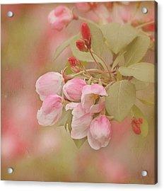 Cherry Buds Acrylic Print by Kim Hojnacki