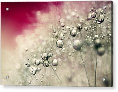 Acrylic Print featuring the photograph Cherry Dandy Drops by Sharon Johnstone
