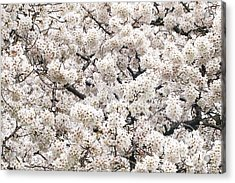 Cherry Dream Acrylic Print