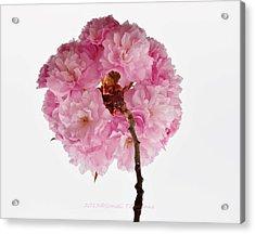 Cherry Globe Acrylic Print