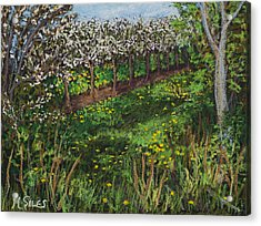 Cherry Orchard Evening Acrylic Print