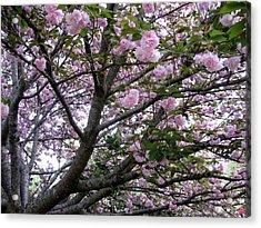 Cherry Tree 3 Acrylic Print by Mimi Saint DAgneaux