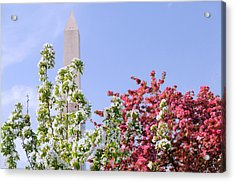 Cherry Trees And Washington Monument Four Acrylic Print