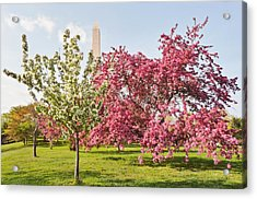 Cherry Trees And Washington Monument Three Acrylic Print