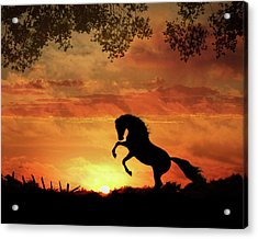 Chestnut Sunset Acrylic Print