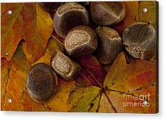 Chestnuts And Fall Leaves Acrylic Print