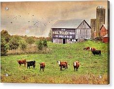 Chew Mail Pouch Acrylic Print by Lori Deiter