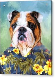 Chic English Bulldog Acrylic Print