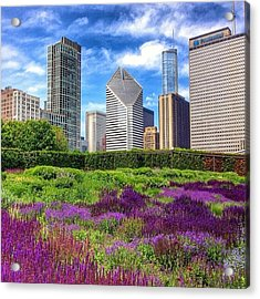 Chicago Skyline At Lurie Garden Acrylic Print