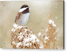 Chickadee And Falling Snow Acrylic Print