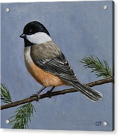 Chickadee Charm Acrylic Print by Crista Forest