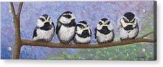Chickadee Chicks Acrylic Print