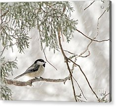Acrylic Print featuring the photograph Chickadee In Snowstorm by Paula Guttilla