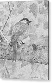 Chickadee In The Rain Acrylic Print