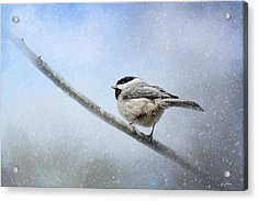 Chickadee In The Snow Acrylic Print by Jai Johnson