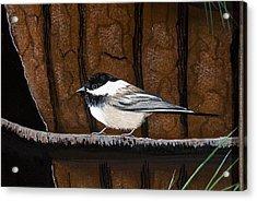 Chickadee Acrylic Print by Jennifer Lake