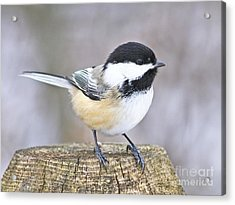 Acrylic Print featuring the photograph Chickadee On A Used To Be Tree by Heather King