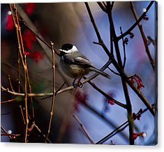 Acrylic Print featuring the photograph Chickadee by Robert L Jackson
