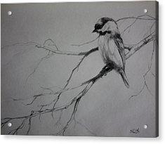 Chickadee Sketch Acrylic Print