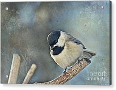 Chickadee With Texture Acrylic Print