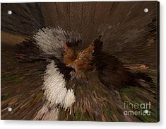 Chicken Art Acrylic Print by Donna Brown