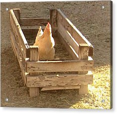 Acrylic Print featuring the photograph Chicken In A Box by Cristophers Dream Artistry