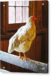 Chicken In Barn Acrylic Print by Susan Savad