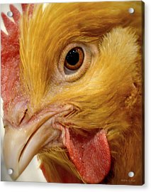 Chicken Vision Acrylic Print