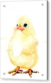 Chickens Watercolor - Peeper  Acrylic Print by Tiberiu Soos