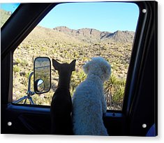 Chico And Ceaser Acrylic Print