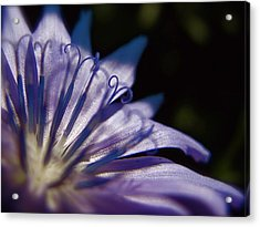 Chicory Acrylic Print by Tim Good