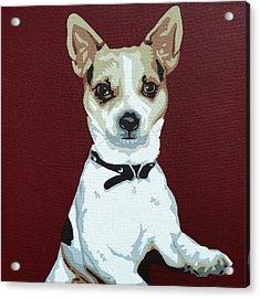 Chihuahua 2 Acrylic Print by Slade Roberts