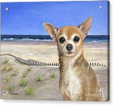 Chihuahua At Sea Isle City New Jersey Acrylic Print by Peggy Dreher