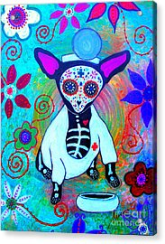 Chihuahua Doctor Acrylic Print by Pristine Cartera Turkus