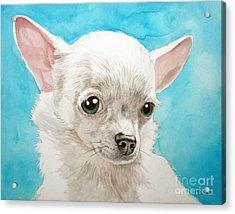 Chihuahua Dog White Acrylic Print