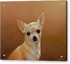 Chihuahua I Acrylic Print by John Silver