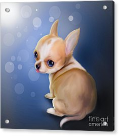 Chihuahua Pup Acrylic Print by Catia Cho
