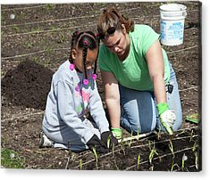Child And Adult Planting Onions Acrylic Print
