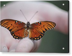 Child And Butterfly - We Shall Renew Again Acrylic Print by Carolina Liechtenstein