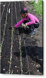 Child Planting Onions Acrylic Print by Jim West