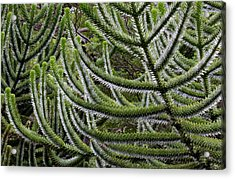 Chile South America Detail, Bark Acrylic Print by Scott T. Smith