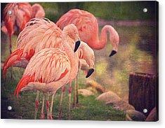 Chilean Flamingos  Acrylic Print by Maria Angelica Maira