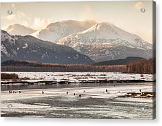 Chilkat Bald Eagle Preserve In Winter Acrylic Print